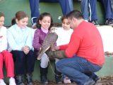 Exbición de rapaces en el Colegio José Plata-4-12-2009_45