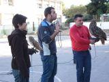 Exbición de rapaces en el Colegio José Plata-4-12-2009_59