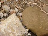 Ruinas de Iliturgi y Calzada Romana_88