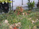 Cruz de Mayo 2010_179