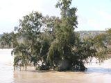 ¡Riadas en Mengíbar!-23-02-2010_210