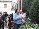 San antón 2010. Vueltas a la Plaza-1_164