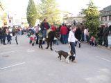 San Antón-2011-1_141