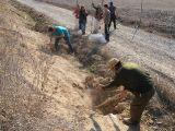 Plantación de árboles 28-02-2012_31