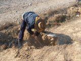 Plantación de árboles 28-02-2012_32