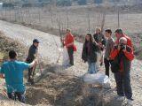 Plantación de árboles 28-02-2012_33