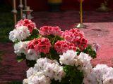 1-Cruz_de_mayo_2008_en_Mengibar_(29)