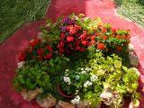 1-Cruz_de_mayo_2008_en_Mengibar_(37)