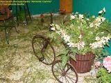 1-Cruz de Mayo 2008 en Mengibar (48)