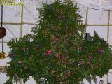 1-Cruz de Mayo 2008 en Mengibar (54)