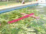 1-Cruz_de_mayo_2008_en_Mengibar_(61)