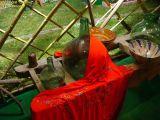 1-Cruz de Mayo 2008 en Mengibar (96)