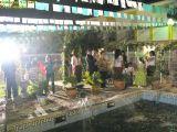2-Cruz de Mayo 2008 en Mengibar (02)