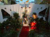 Cruz de Mayo 2005 8