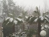 25 de Enero. Otra Gran nevada . Fotos de Hilario Ciórraga