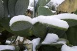 25 de Enero. Otra Gran nevada . Fotos de Juan Lanzas