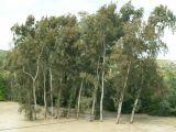 Guadalquivir_(08)