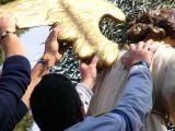 Jueves Santo. Traslado de la Virgen de la Amargura 43