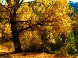 Luz y Color 11