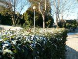 Nieve en Mengíbar 36