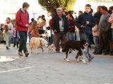 San Antón 2005 20