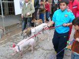 San Antón 2008 en Mengíbar 19