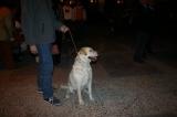 San Anton 2007. Bendición. Fotos de Emilia Hoyo 76